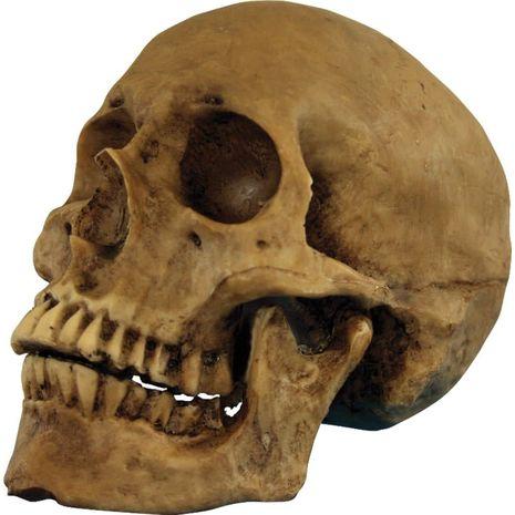 Бутафорский череп из полиресина